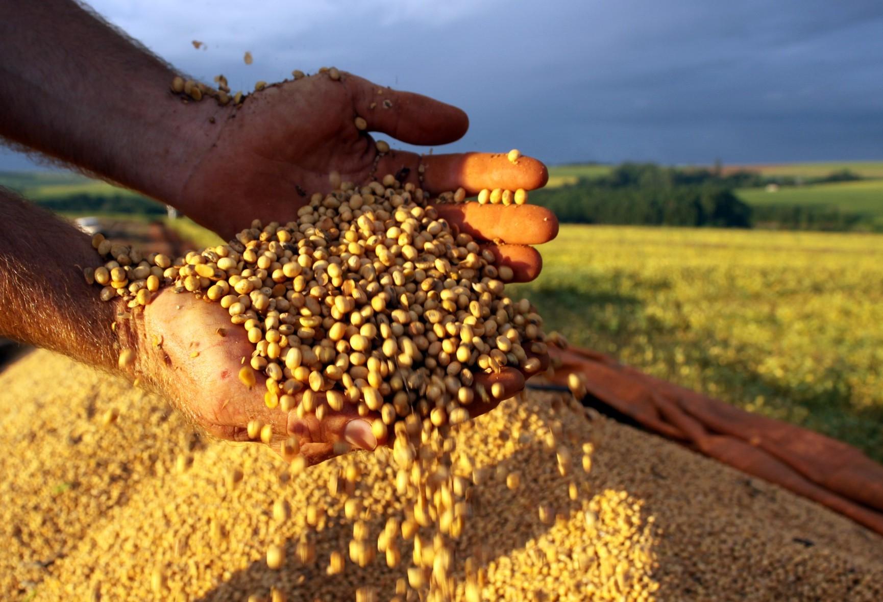 Brasil pode ultrapassar EUA e se tornar o maior produtor de soja do mundo