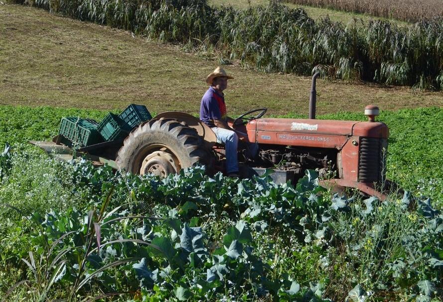 Participação do setor rural brasileiro na preservação ambiental é maior que o esperado