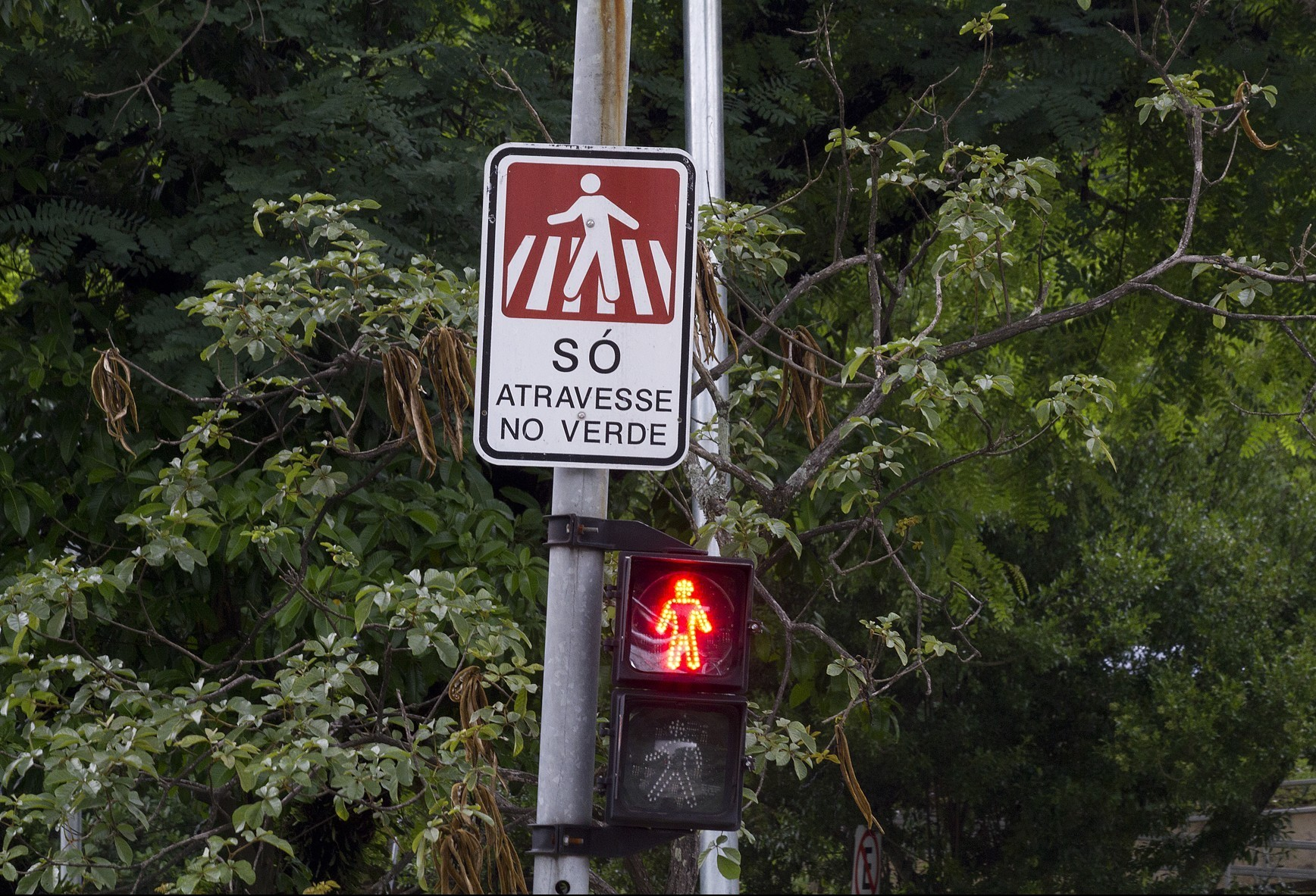 Prefeitura de Maringá quer comprar 296 semáforos para pedestres
