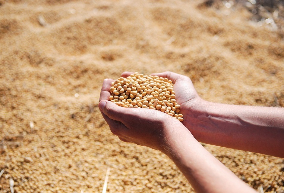 Soja custa R$ 71,50 a saca de 60kg