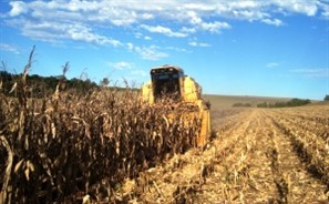 Estiagem já provoca perdas em lavouras de milho e soja na região de Maringá