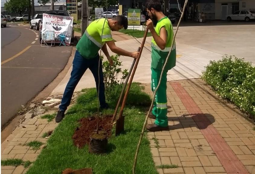 Empresário é multado em R$ 20 mil por corte irregular de cinco árvores