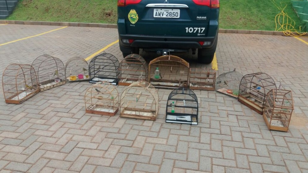 PM apreende 13 aves silvestres