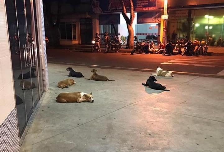Cães passam dois dias na porta de hospital à espera do dono