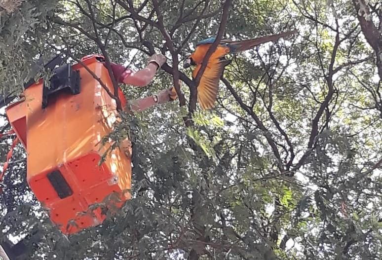 Bombeiros resgatam arara que estava no topo de uma árvore