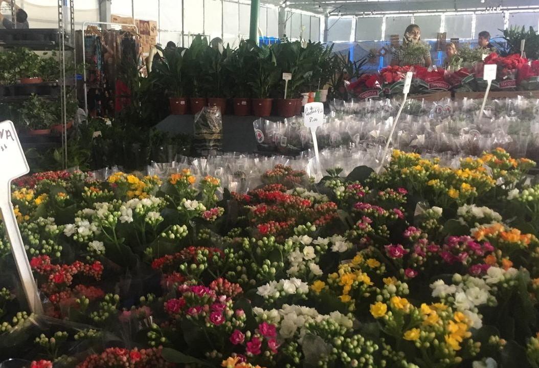 Feira oferta mais de 500 tipos de flores e plantas ornamentais e frutíferas