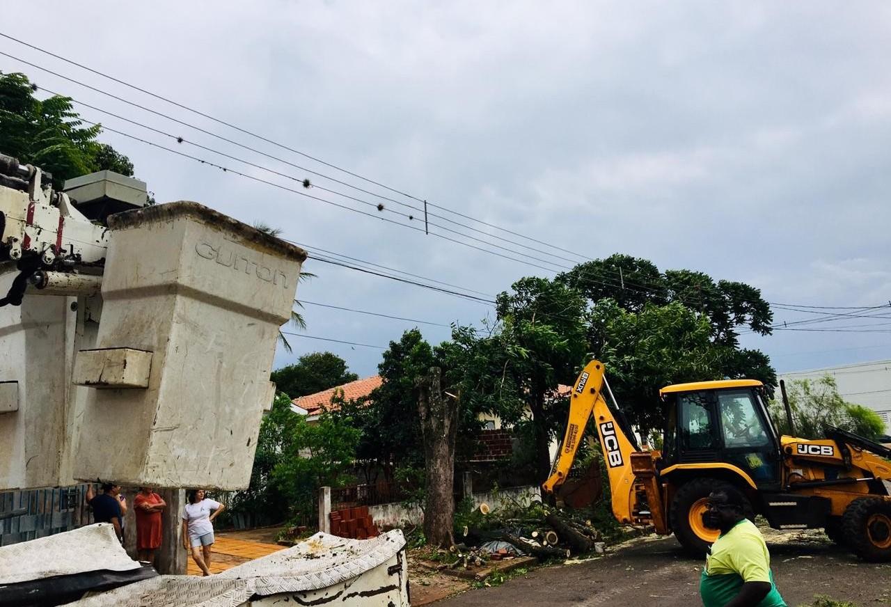 15 árvores caíram em Maringá nesta quarta (31)