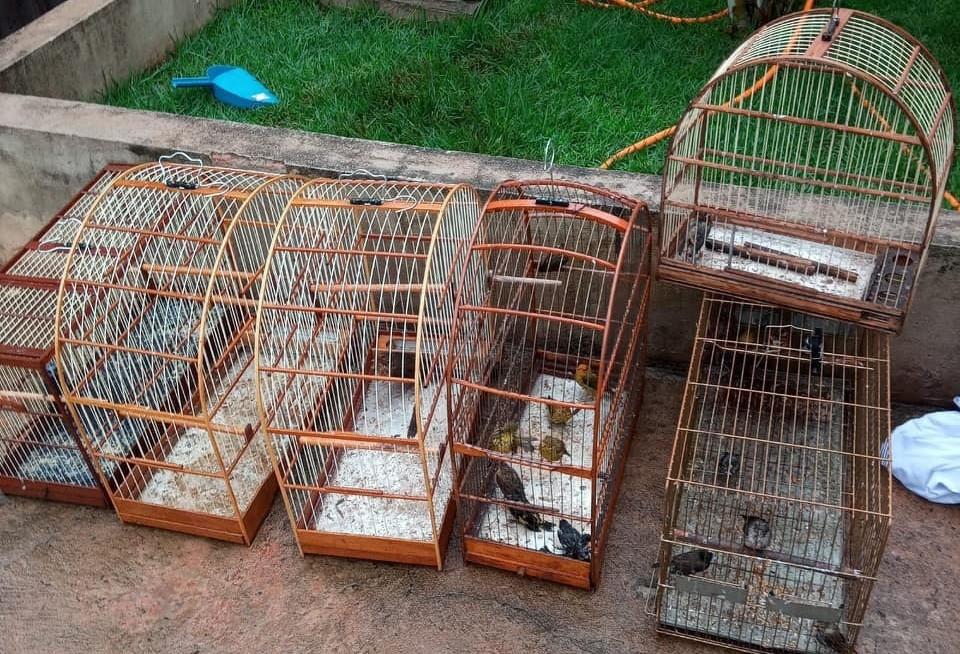 Mulher é multada em R$ 29 mil por manter aves em cativeiro