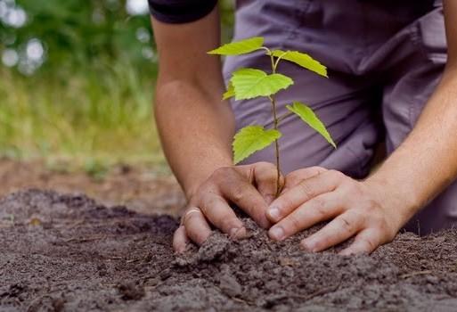 Empresa homenageia pioneiros com iniciativa sustentável