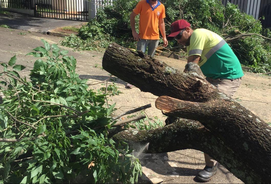 208 árvores caíram em Maringá na quinta-feira (18)