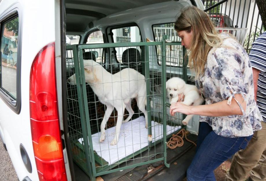 Ouvidoria de Maringá recebeu 1,6 mil denúncias de maus tratos a animais