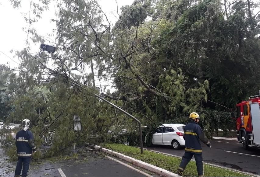 Temporal que atingiu Maringá derrubou 109 árvores