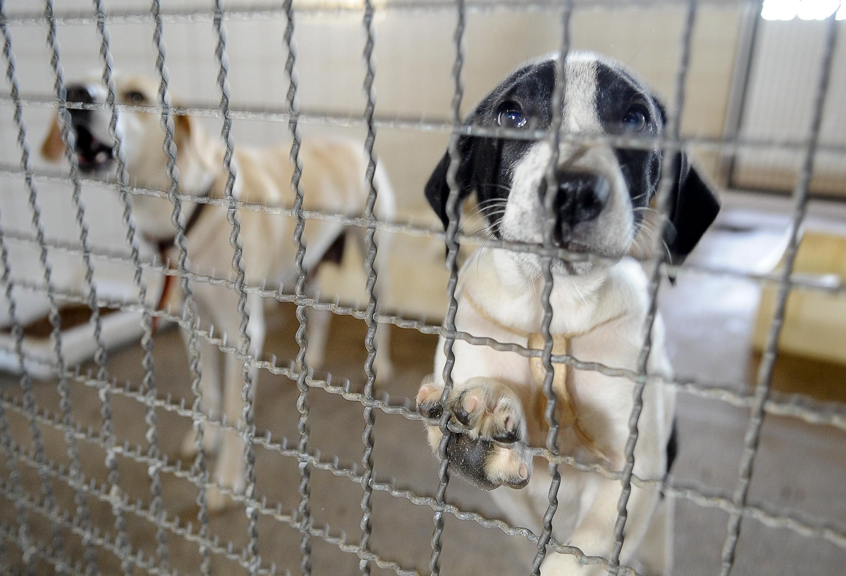 Prefeitura tem mais de 70 cães e gatos para adoção