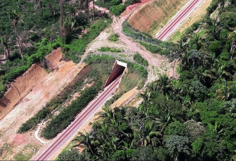 Viadutos de fauna são feitos para animais atravessarem a estrada sem risco