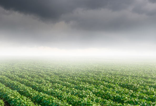 14% da soja foi perdida por conta do clima