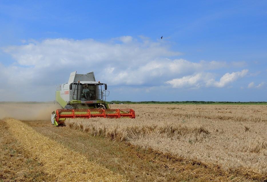 Colheita de trigo no Paraná começa com duas semanas de atraso