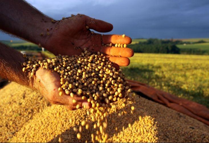 Alta do dólar valoriza preço dos grãos