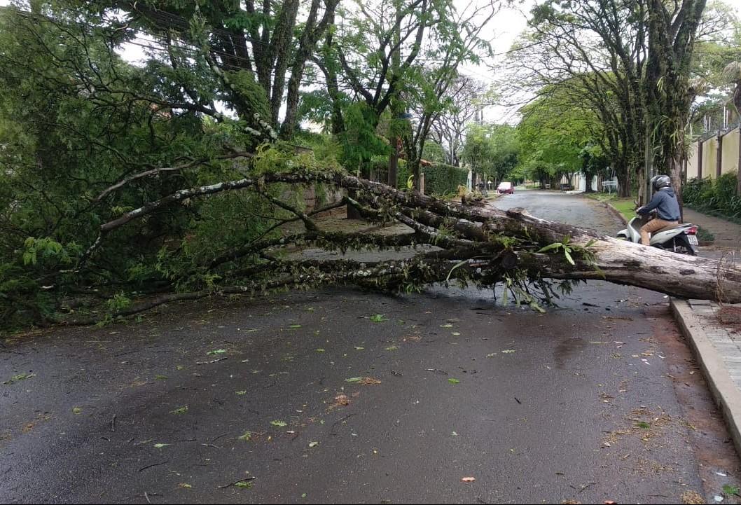 Chuva derruba duas árvores em ruas de Maringá
