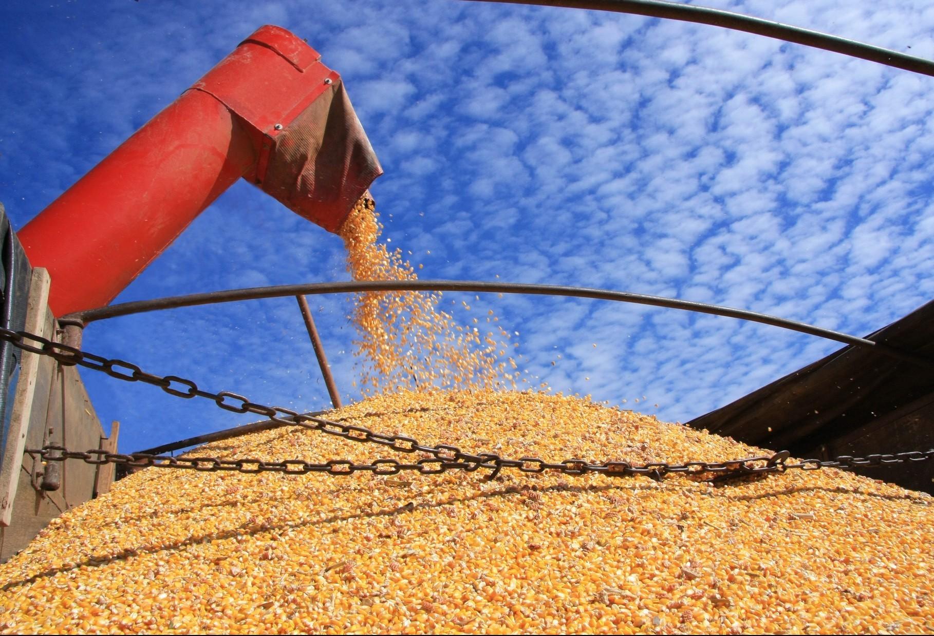 Colheita da soja está atrasada no Paraná