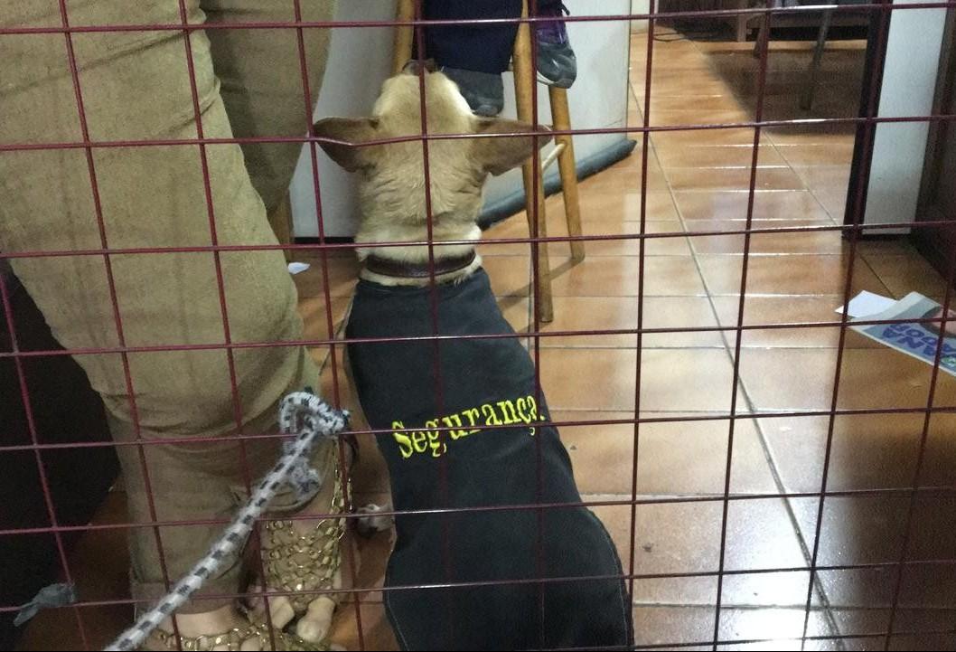 Cão resgatado das ruas chama a atenção em frente à delegacia de Maringá