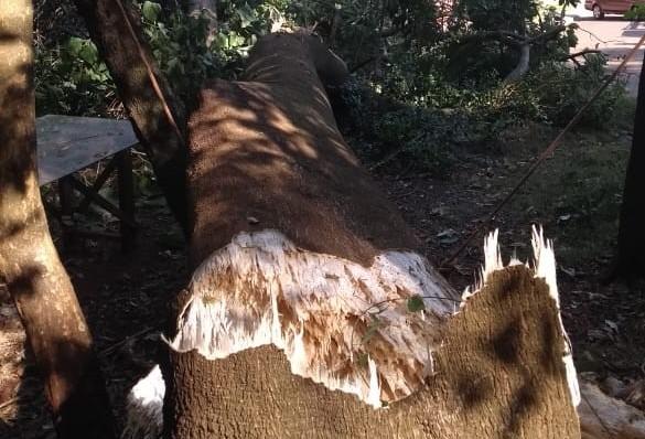 Árvore de grande porte cai em frente a residência do jardim Atami