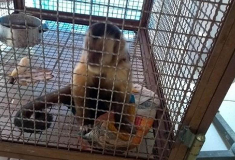 Macaco invade residência e morde morador em Umuarama