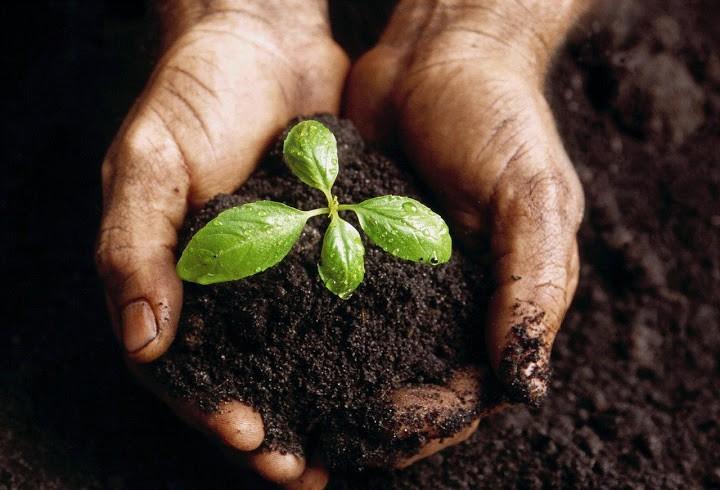 Governo do Paraná desenvolve programa de agricultura sustentável