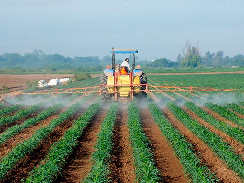 Como é produzir grãos no Amapá e Bolívia?