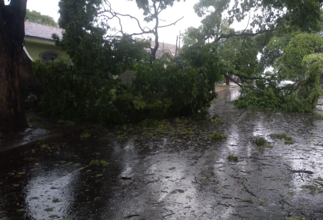 Das 30 árvores que caíram em Maringá, oito atingiram casas e veículos