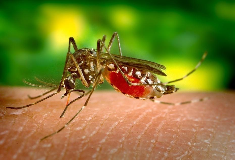 Três novos casos de dengue em Maringá entram no balanço estadual