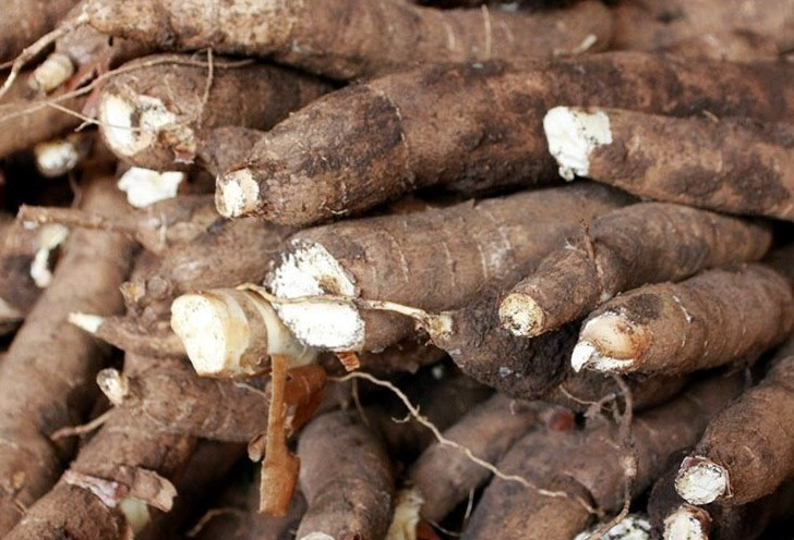 Tonelada da raiz de mandioca custa R$ 335 em Paranavaí