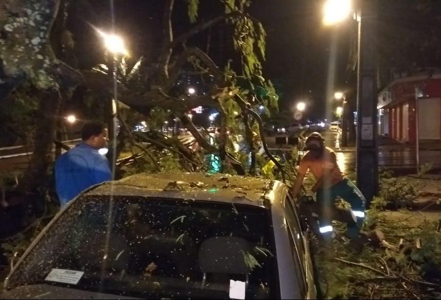 Chuva derruba duas árvores em Maringá e alaga vários pontos