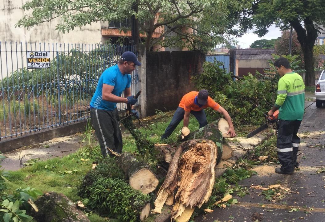 Quedas de árvores geram R$ 508 mil em prejuízos aos cofres públicos