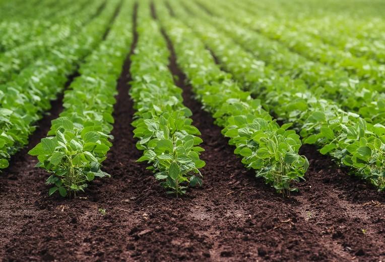 Paraná: plantio da soja está liberado a partir desta quarta-feira (11)