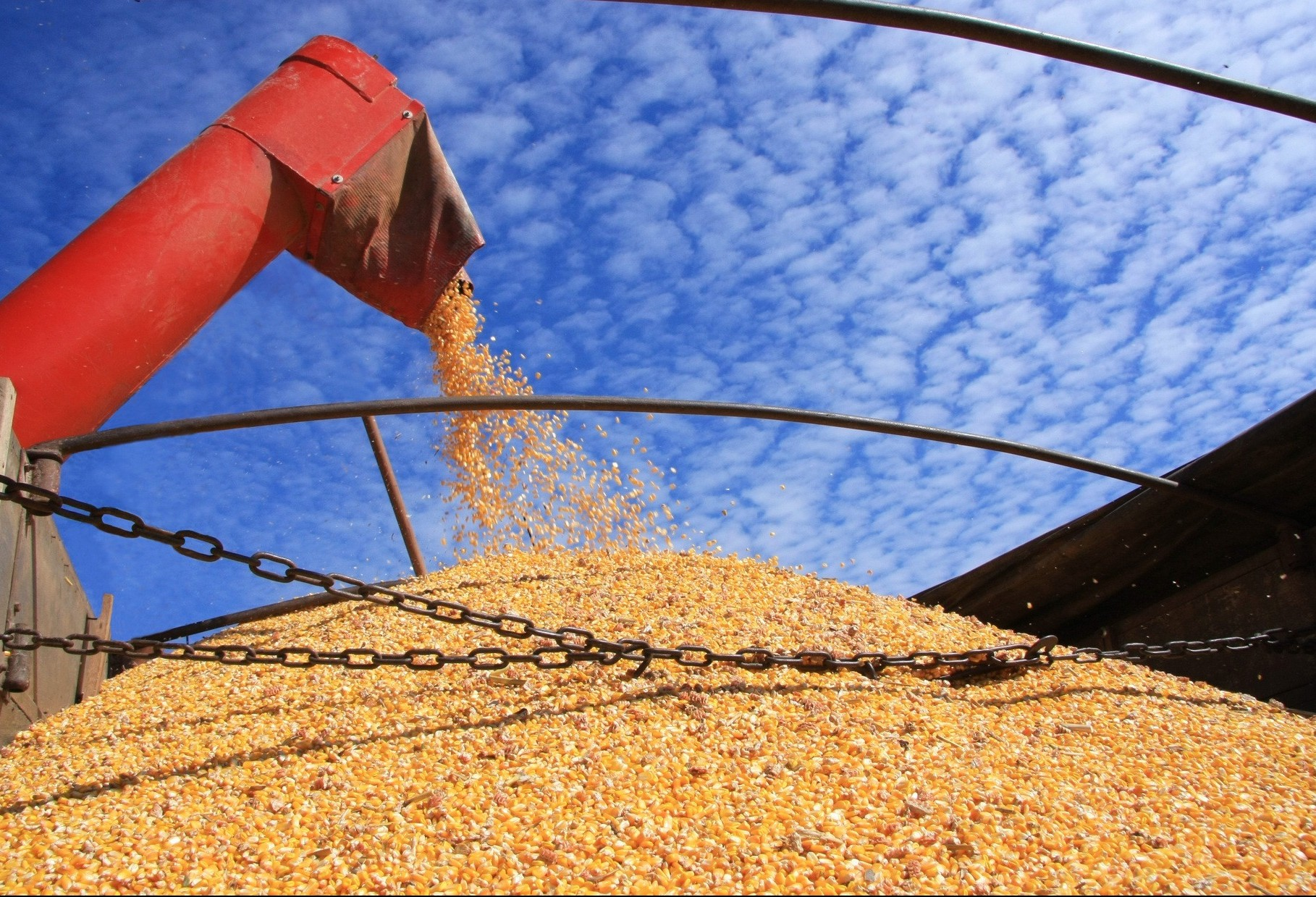 Colheita da soja chega a 74% no Paraná