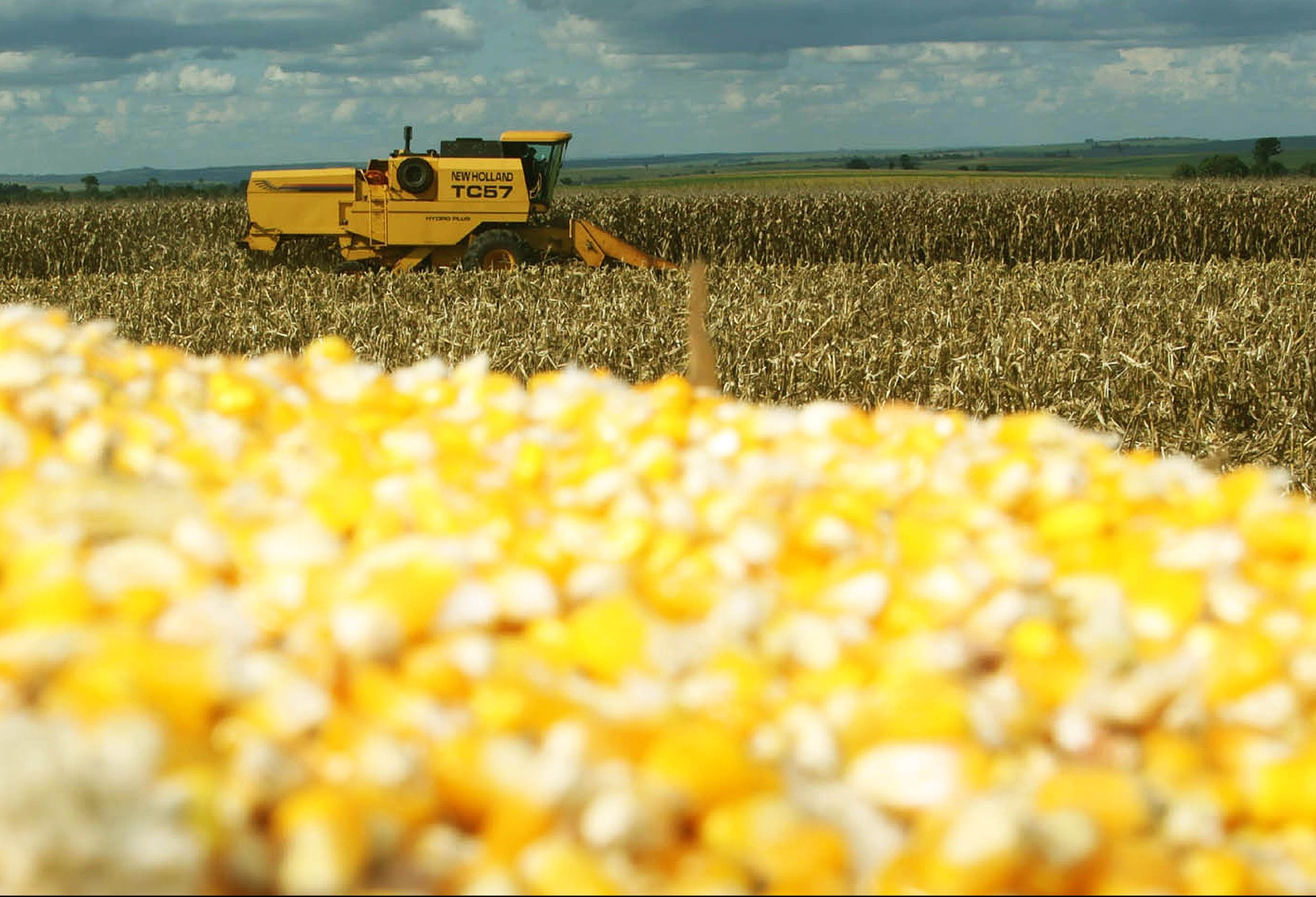 Preço do milho permanece em queda em várias praças do Paraná