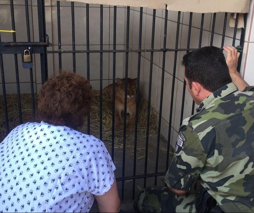 Policial que resgatou puma atropelado se emociona