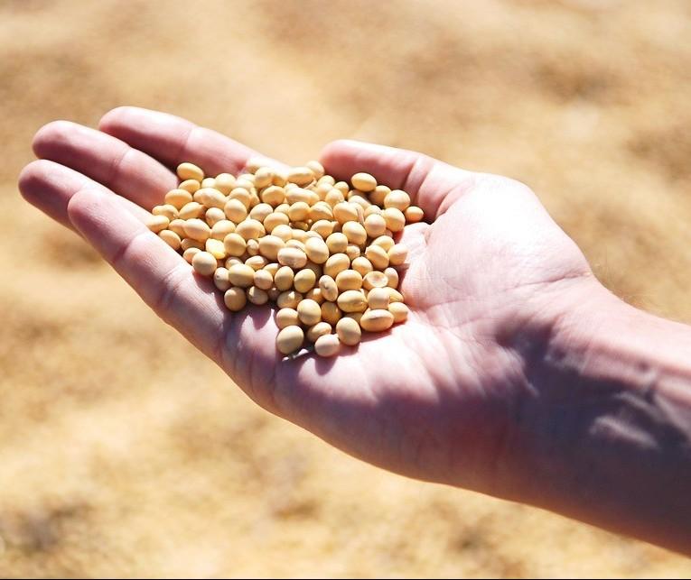 Tempo frio durante a noite dificulta germinação da soja