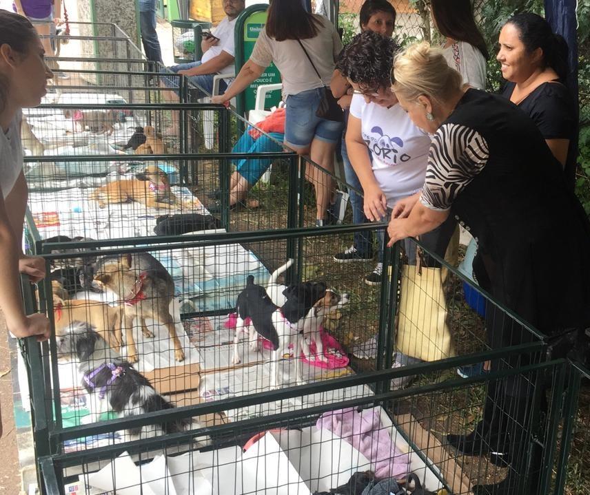 Feira de adoção oferece mais de 70 animais