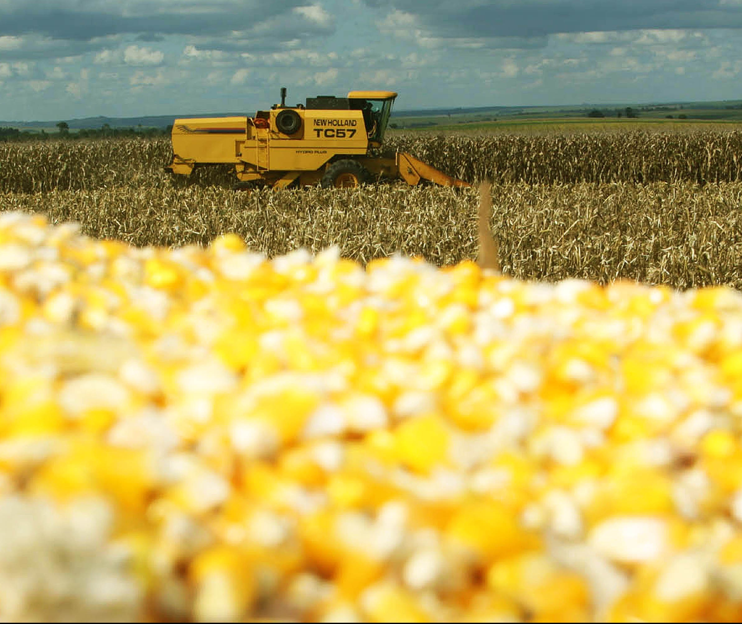 Baixa de preços do milho e valorização do frango aumentam poder de compra do produtor