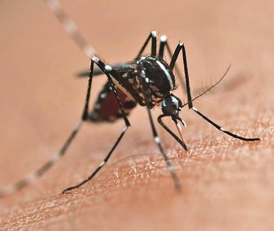 Com oito mortes, Maringá tem 6.896 casos de dengue