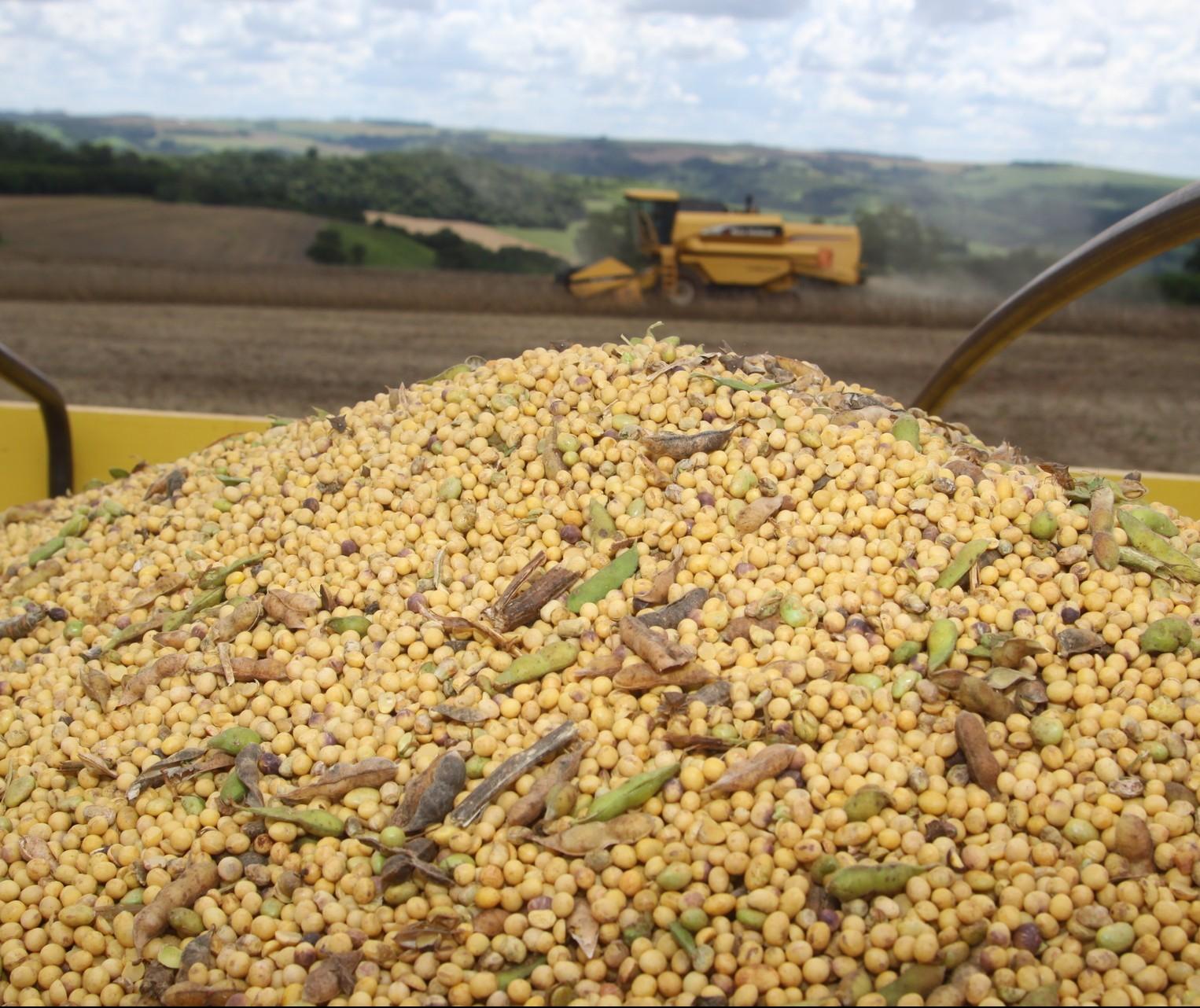 90% da soja da safra passada foi comercializada