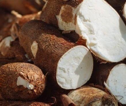 Tonelada da raiz de mandioca custa R$ 320 em Campo Mourão