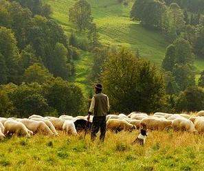 Uma em cada três propriedades rurais possuem mulheres no comando