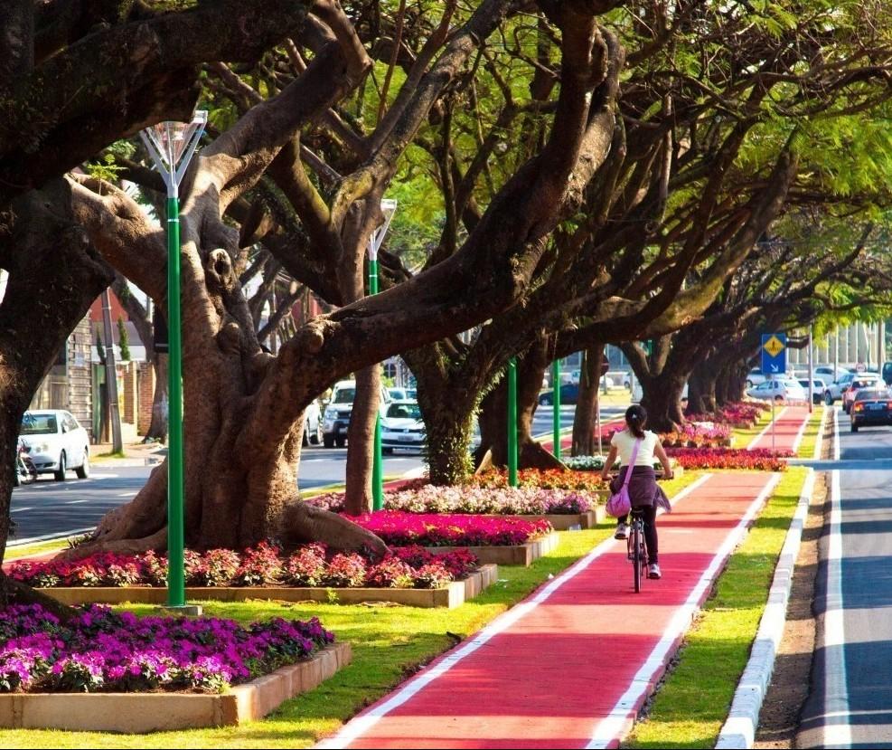 Sistema dará a localização de cada uma das 220 mil árvores de Maringá