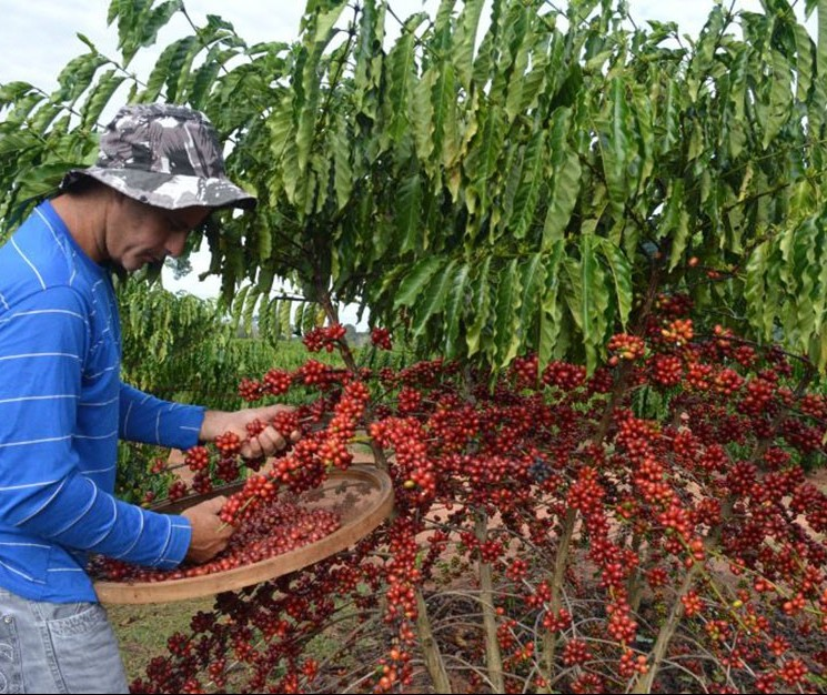 Ministério da Agricultura propõe juros menores para crédito rural