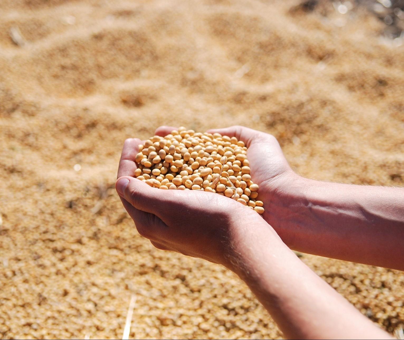 Soja custa R$ 146 a saca em Maringá