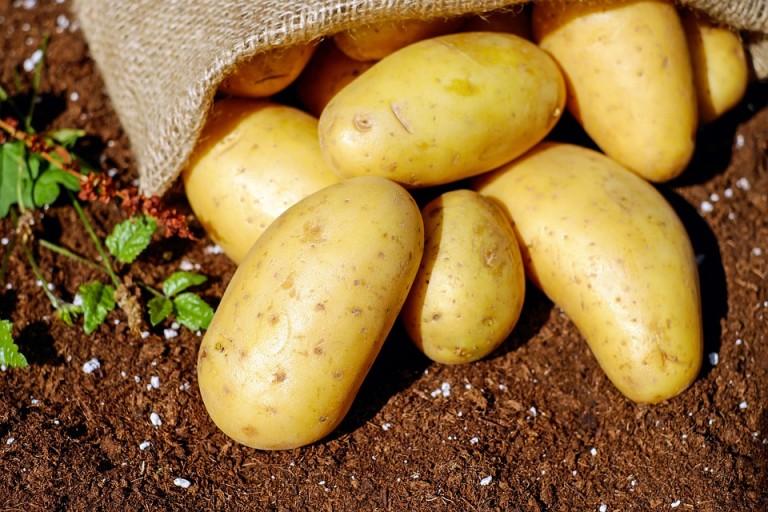 Colheita da batata começa no Paraná