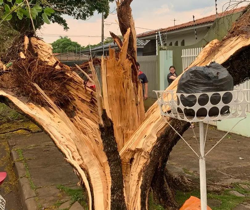 Durante temporal, raio parte árvore ao meio em Maringá