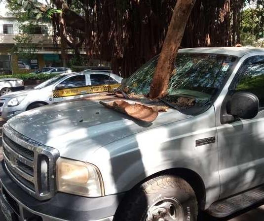 Galho de árvore cai e atravessa para-brisa de caminhonete em Maringá